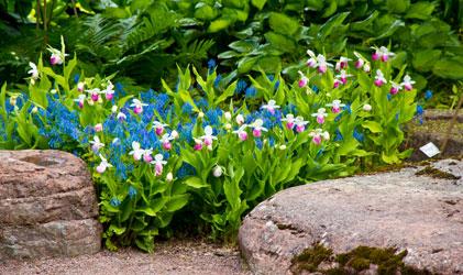 Botaniska Trädgården 120617