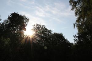 Tidig vårmorgon