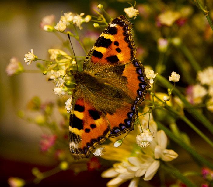 Fjäril på besök